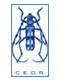 logo-rosalia60px