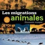 Les migrations animales : étonnants voyages